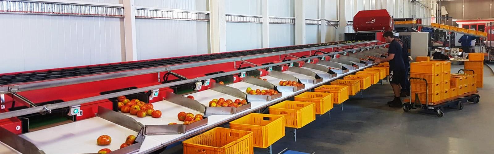 Tomaten sorteerlijn Australië | Steenks Service